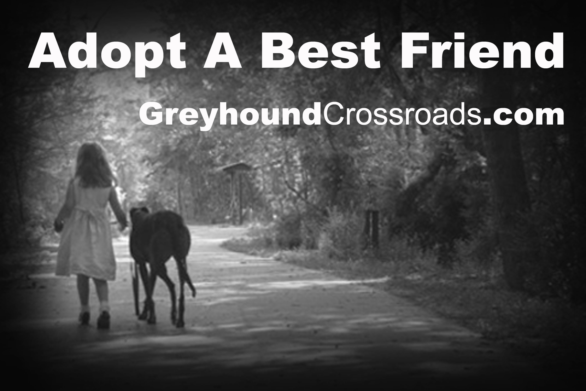 Adopt A Best Friend Greyhound Crossroads