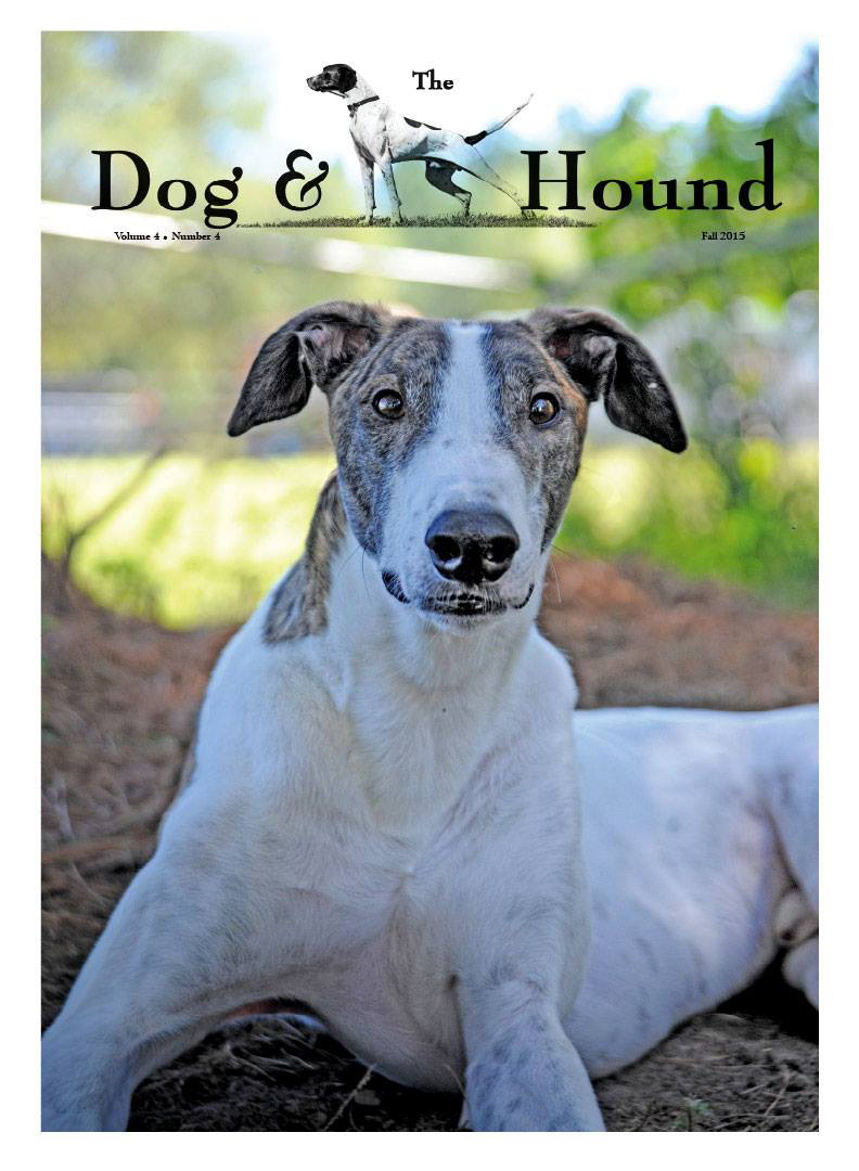Greyhound Cover on Dog & Hound Magazine