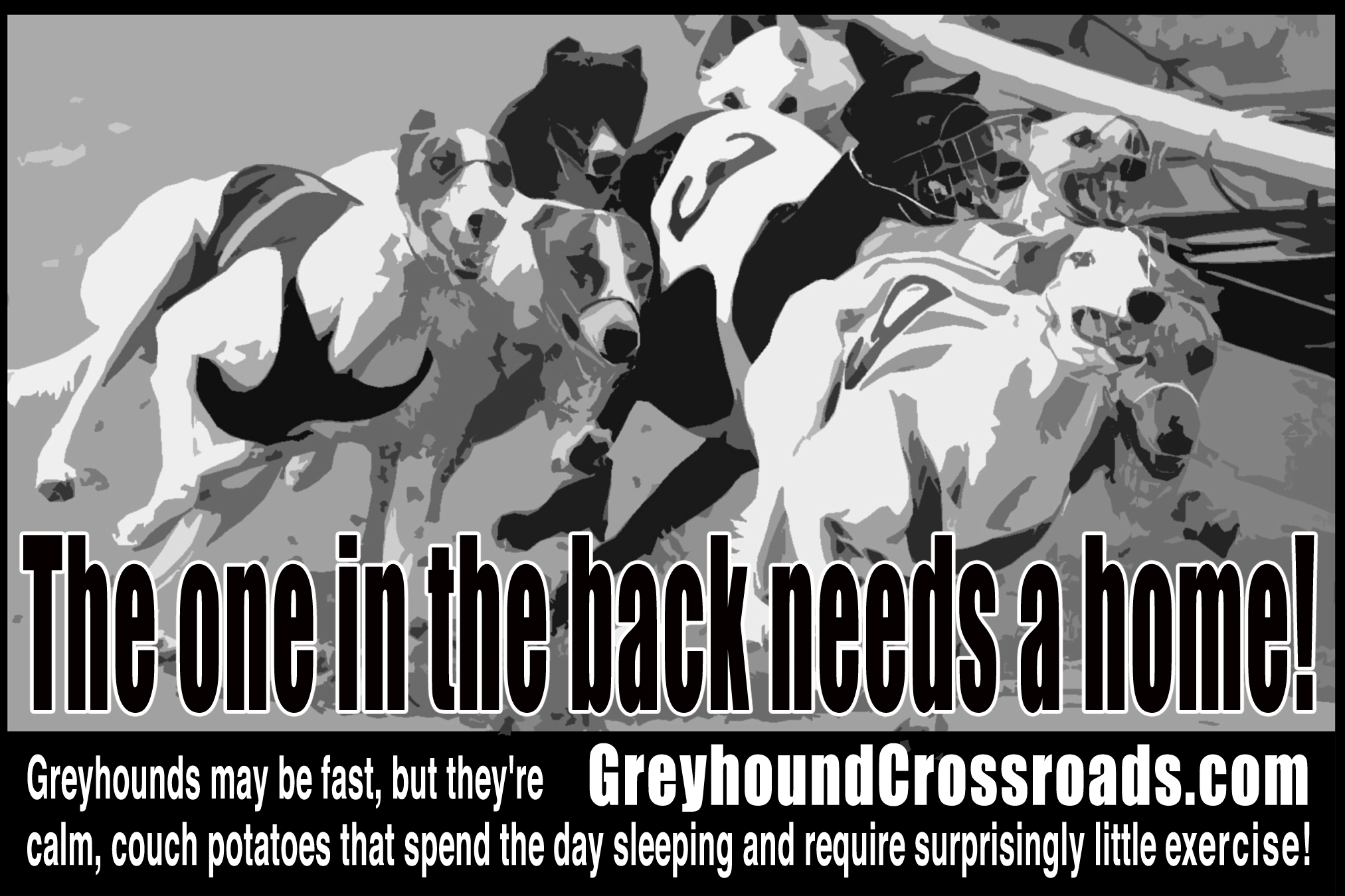 de0eb3cb17 This page is intended to give you a serious look at the steps to adopting a  greyhound. As much as we love greyhounds