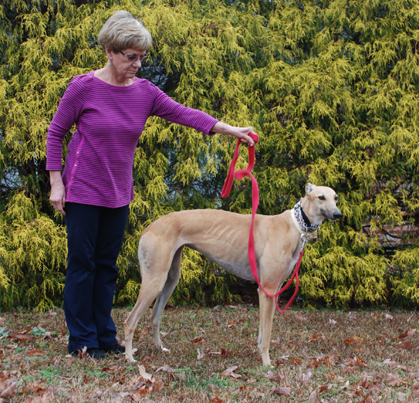 Greyhound Assistant Leash in way