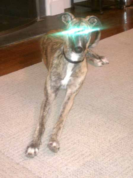 Greyhound alien eyes eye shine green