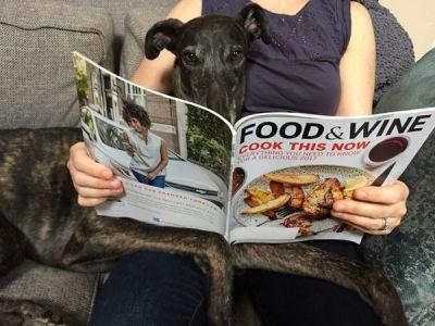 Magazine Greyhoundsm.JPG