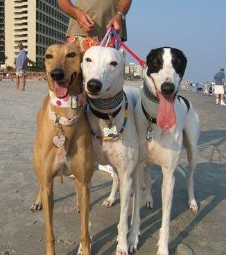 Petco Myrtle Beach Adoption